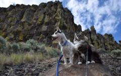 Gatto speciale aiuta cane a guarire: un'amicizia unica