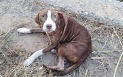 Cane salva anziano malato di Alzheimer perso in un bosco
