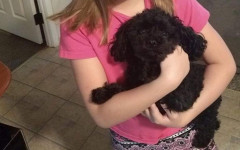 Cane barboncino salva famiglia da un orso