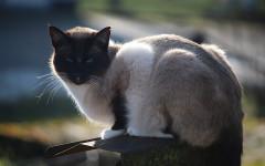 Pregiudizi gatti adulti: quali sono i più comuni nelle adozioni?
