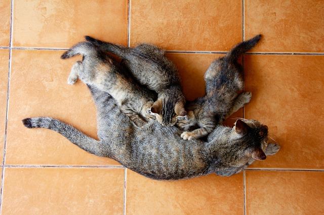 Gatto è stato poco con mamma gatta: come fare a saperlo?