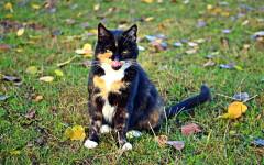 Orijen gatti: alimentazione studiata e ricercata