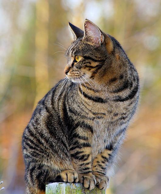 Repelente gatos: cómo ahuyentar gatos sin maltratarlos