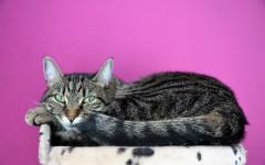 Cómo saber si mi gato esta estresado: veamos