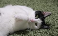 Hill's gatti: prendersi cura del proprio gatto