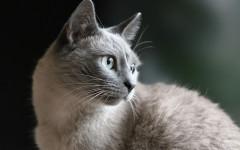Alergia gatos: cómo prevenir la alergia por los gatos