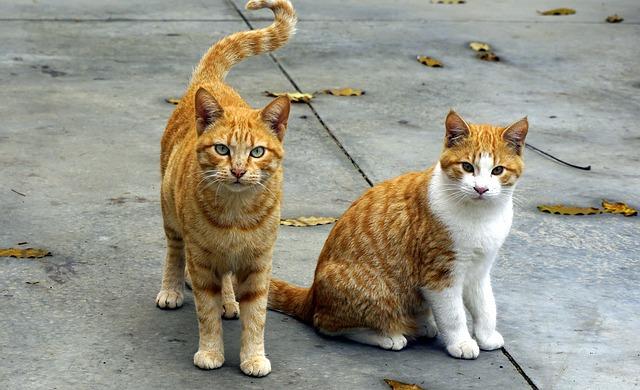 Incendio al gattile di Rho: raccolta fondi