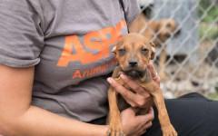 Cani salvati da combattimenti clandestini