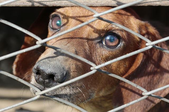 Salvati cani da uragano Florence