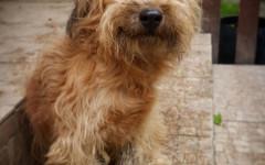 Perro sonriendo: ¿los perros pueden sonreír?