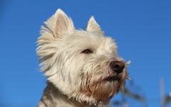 Ultima cibo per cani: una garanzia per gli amici a quattro zampe