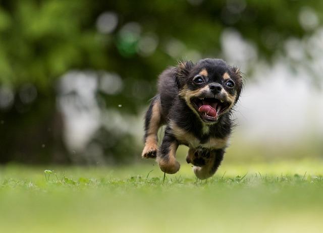 Mangime per cani happy dog: ingredienti naturali per Fido