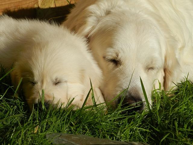 Embarazo perro: cuidados para las perritas embarazadas
