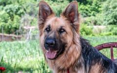 Cane ferito va in ospedale per farsi curare