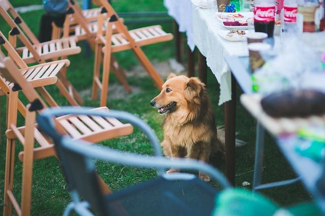 Educare un cane a non chiedere cibo a tavola: come fare
