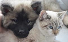 Legge contro consumo di carne di cani e gatti negli Stati Uniti