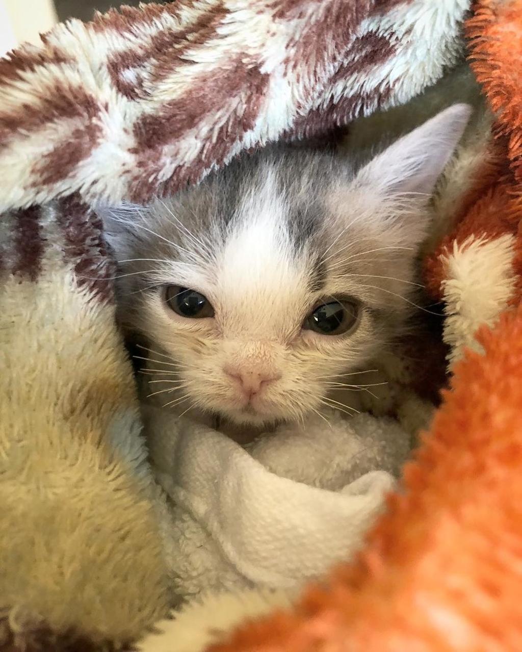Gattino piccolissimo trova qualcuno che lo ama