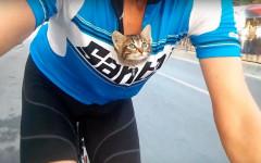 Ciclista salva gattino abbandonato e lo porta con se