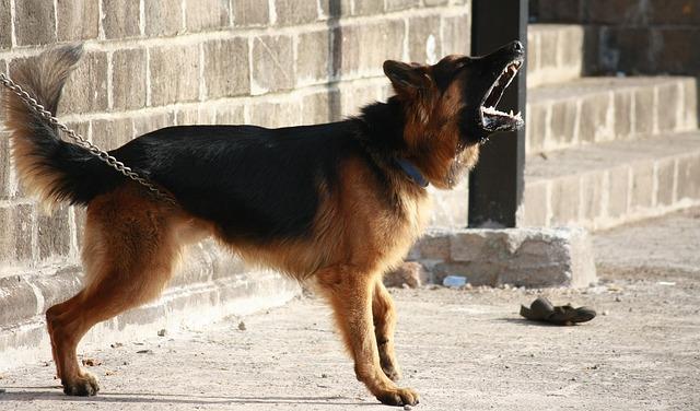 Perro agresivo: cómo lidiar con la agresividad canina