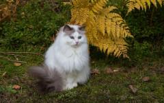 Insegnare al gatto a stare seduto: come fare?