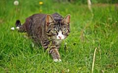 Pipetas para gatos: la solución ideal para gatos
