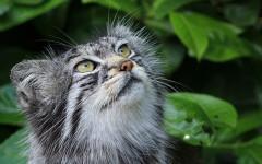 Gatos salvajes: ¿cuáles son los más impactantes?