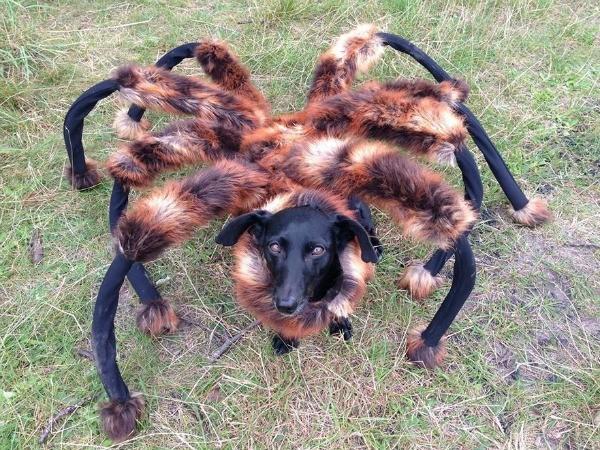 Perro araña una broma muy canina se hizo viral