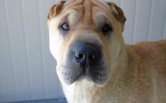 Perro con síndrome de down: ¿hay perros con down?
