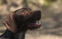 Zara cerca casa, aiutiamola! Appello per adozione