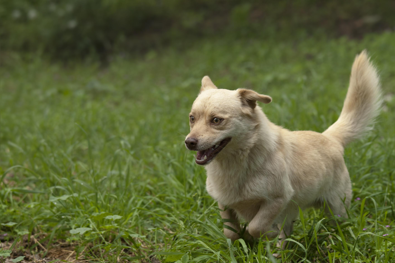 Zecchino cerca casa: appello per adozione