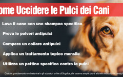 Infografica: come eliminare le pulci del cane