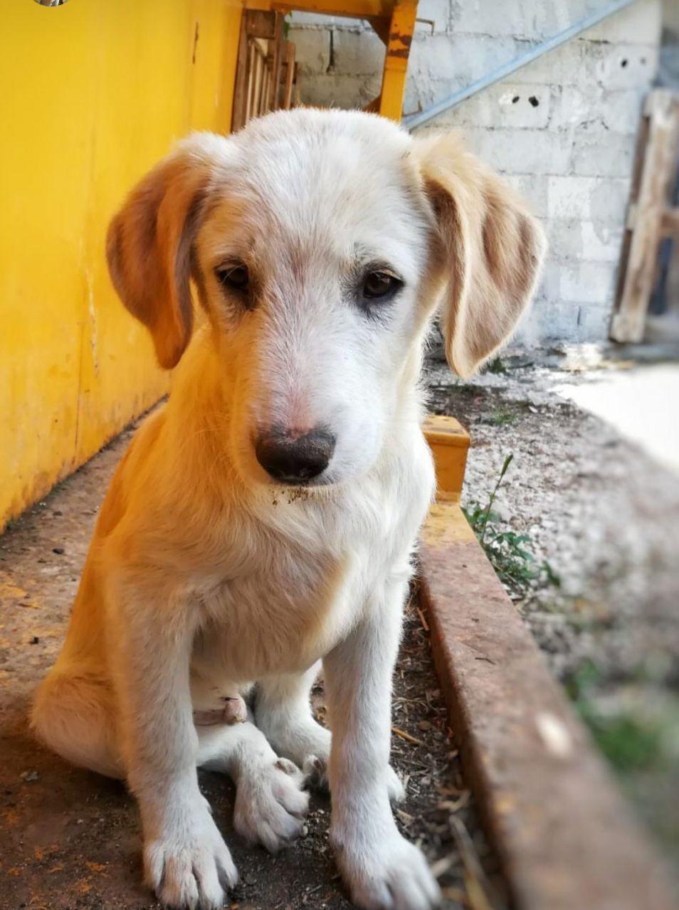 Tick cerca casa, aiutiamolo! Appello per adozione