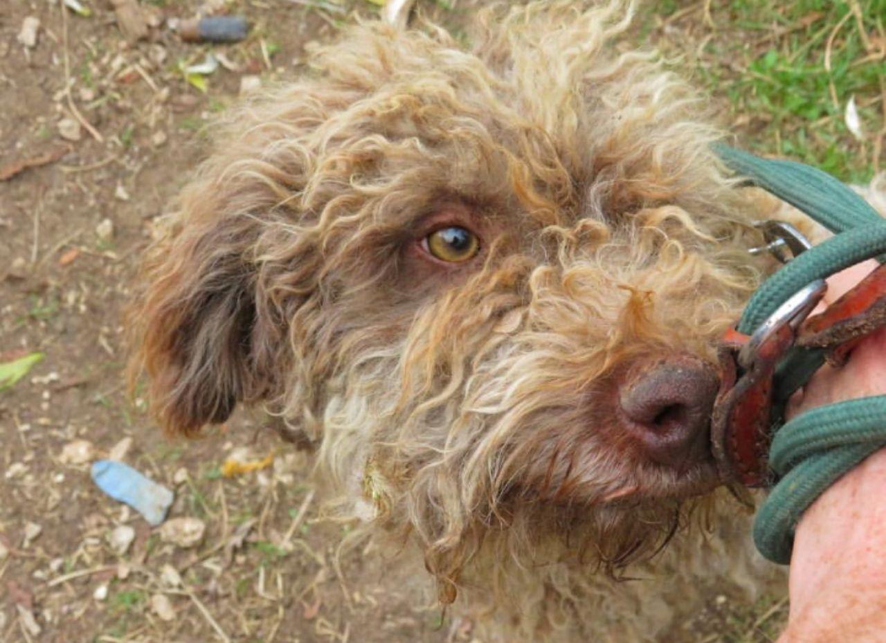 Damien cerca casa: appello per adozione