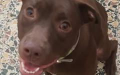 Dakota cerca casa: appello per adozione