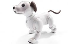 Robot da compagnia Aibo: può sostituite l'amore di un cane?
