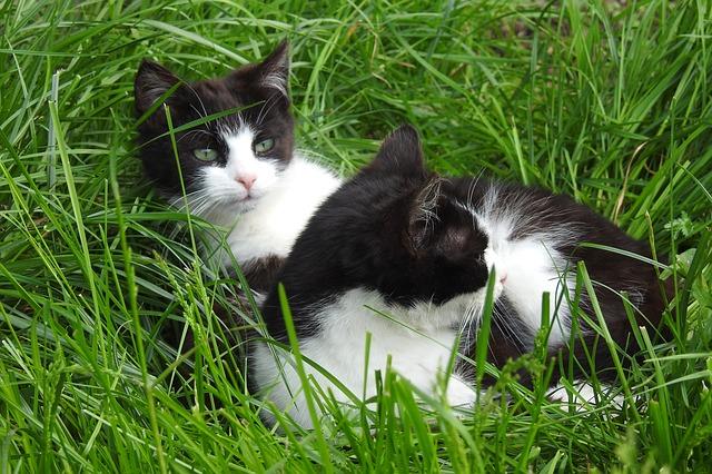 Antiparassitario per gatti: come scegliere quello adatto?