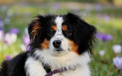 ¿Los perros pueden tener dolor de cabeza? ¿Cierto o falso?