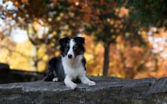Tenia del cane: cause, sintomi e terapia