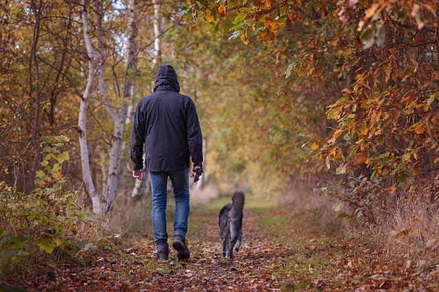 Pasear al perro con lluvia: consejos para dueños de mascotas