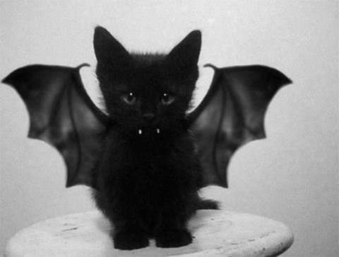 Halloween cat costumes: bored of the Same Thing?