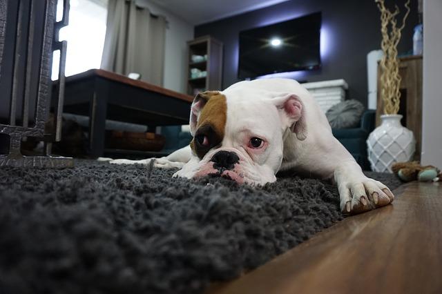 Cani tristi perché stiamo troppo tempo al cellulare