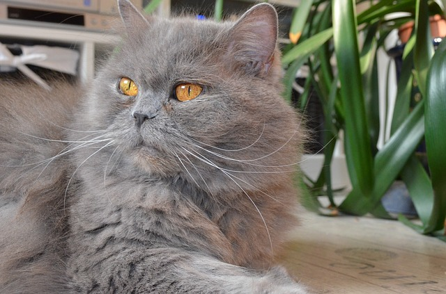 ¿Por qué los gatos pierden pelo? Lo que preguntan los dueños