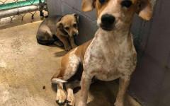Cagnolina protegge cucciolo nel rifugio: amore puro