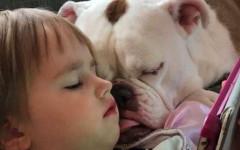 Cane aiuta bambina a superare la morte del padre
