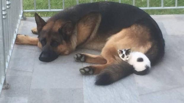 Cane cerca padroni e percorre 8 chilometri per trovarli