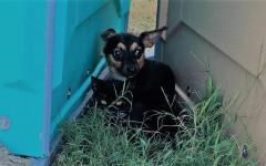 Cane protegge gatto: una bellissima storia di amicizia