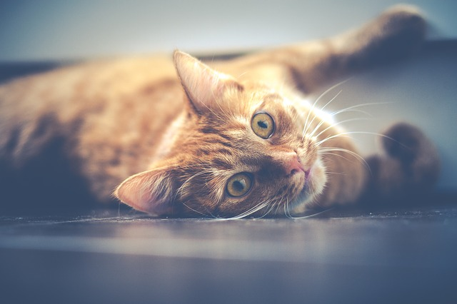Arañazo de gato: puede ser más peligroso de lo que crees