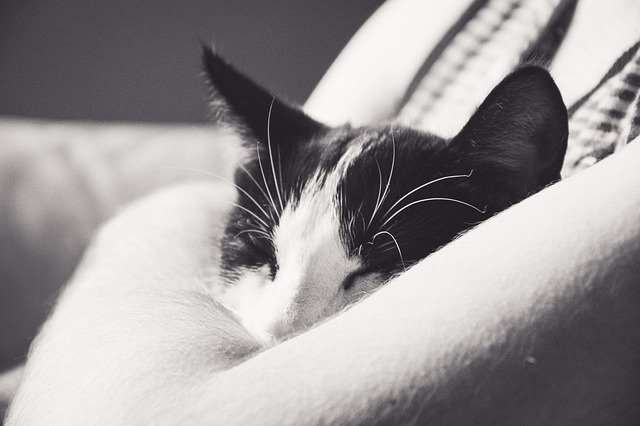 ¿Por qué mi gato duerme conmigo? Un curioso comportamiento