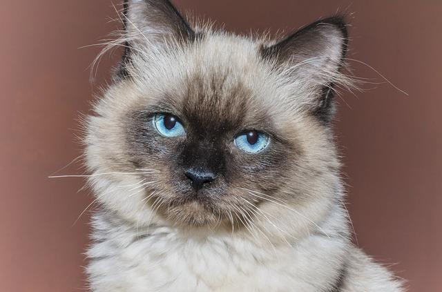 Bronchite nel gatto: come riconoscerla e curarla