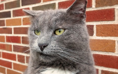 Cat is stressed: How to know if a cat is stressed